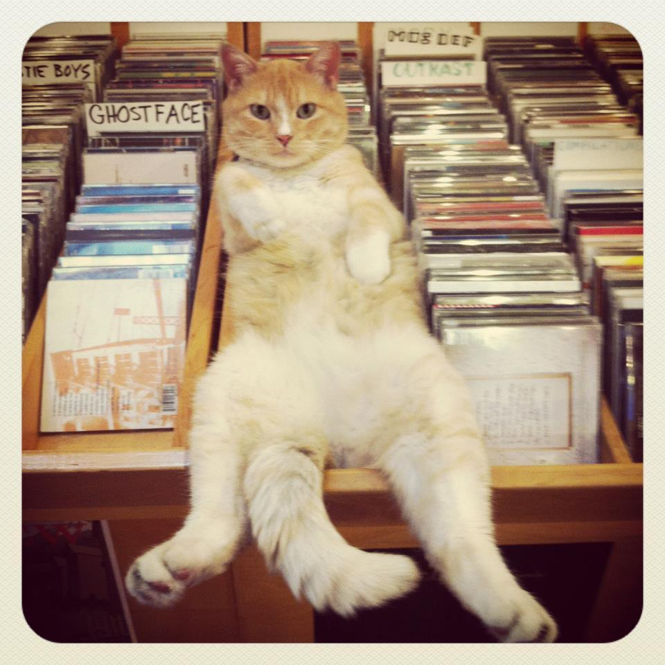 viajholla:  Love Garden Sounds in Lawrence, KS has the best store cats forever and ever.