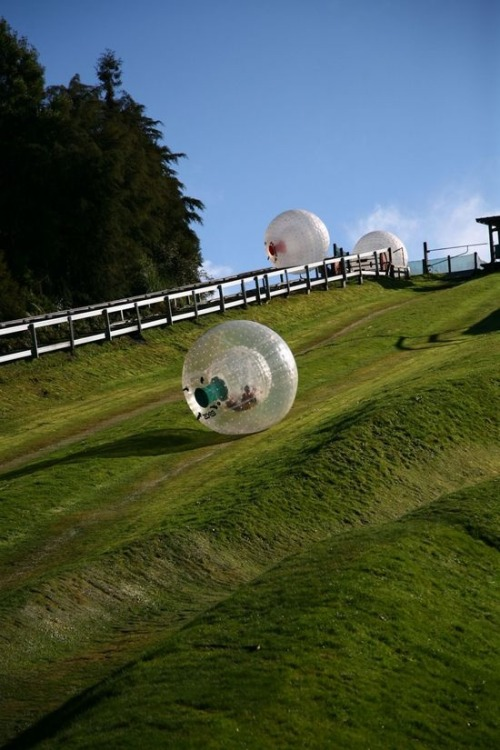 Anyone want to go zorbing in Rotorua, New Zealand? (via)