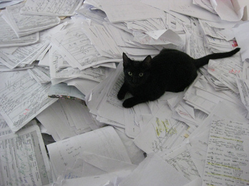 getoutoftherecat:  thanks for helping with the taxes cat.