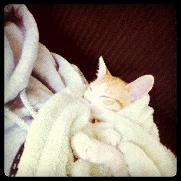I wonder what the bebe #kitty is dreaming about:) #meow  (Taken with Instagram)