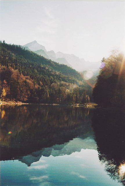 novaas:  blue leaves by Careless Edition on Flickr.