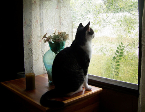 "catslookingoutthewindowattherain:  ""Every day they ask me the same question. Every single day. How am I supposed to know who's a pretty boy? Who is a pretty boy?"" Frankie's self esteem problems prevented him from ever fully appreciating his guardian's praises.  (by hopalongcassidyp)  Now with captions."