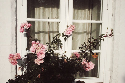 curlytweets:  Roses by Pearled on Flickr