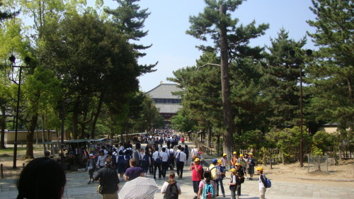 Crowds of School Children - Todaiji, Nara