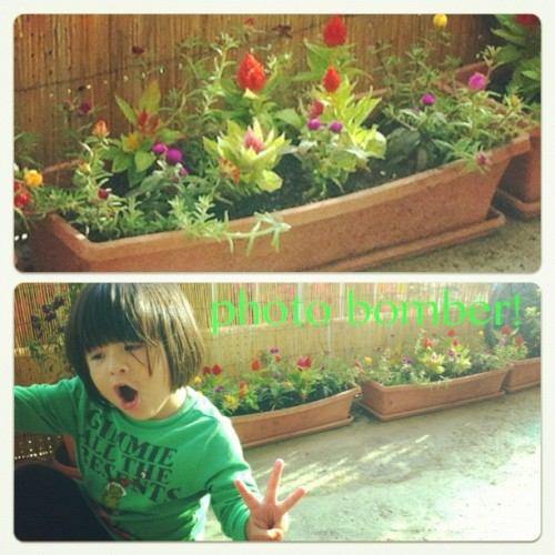 just trying to take a pic of my flowers! (Taken with Instagram at my fortress in the sky)