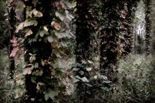 kaustubha:  (via faerie trees … - JPG Photos)