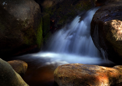 llbwwb:  Padley Gorge (by Theresa Elvin)