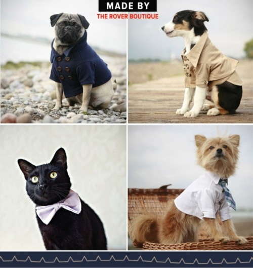 Rover boutique stylish clothes for animals