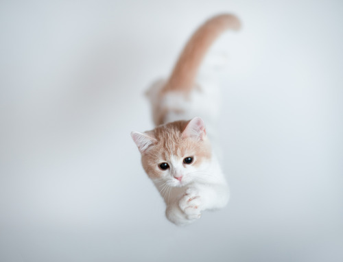 778:  Jumping Kitten (via torode)