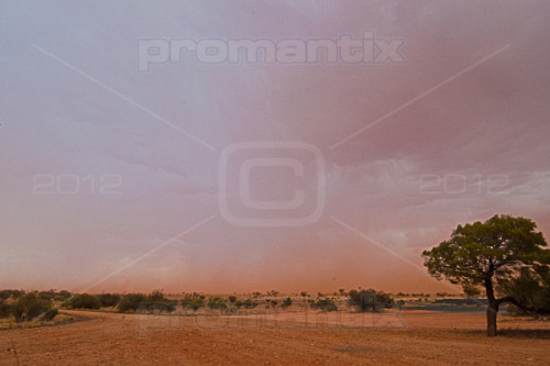 Dust. A rain storm whips up dust clouds as beads of water pound the desert earth.  A landscape turns wild as the winds approach driving wet sandy rain towards us.