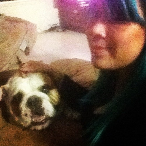 robynxtc:  Meet my new friend Dozer!! #bulldog (Taken with Instagram)