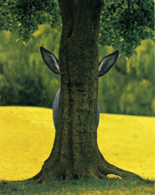 srdash:  Hide and seek donkey