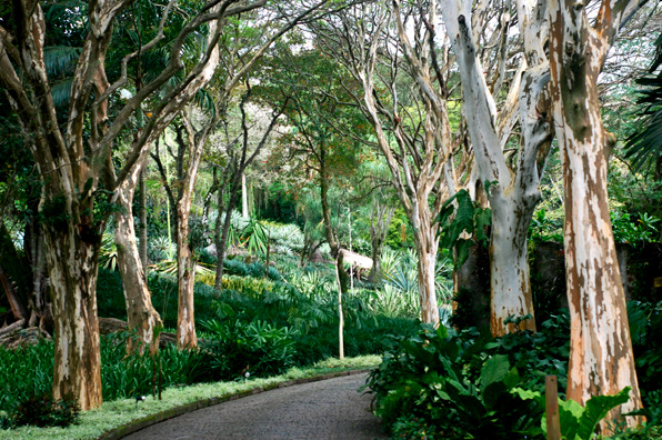 Sitio Roberto Burle Marx located 2 hours from Rio de Janeiro, Brazil. Mr. Marx purchased the property in 1949 with his brother and planted it with 3500 species mainly native to Brazil. As in so many thing, he was ahead of his time in seeing the value of native plants.