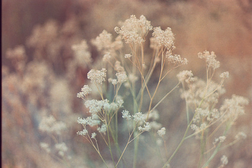 thesneakylittleminx:  sem título by Zael Zavala on Flickr.