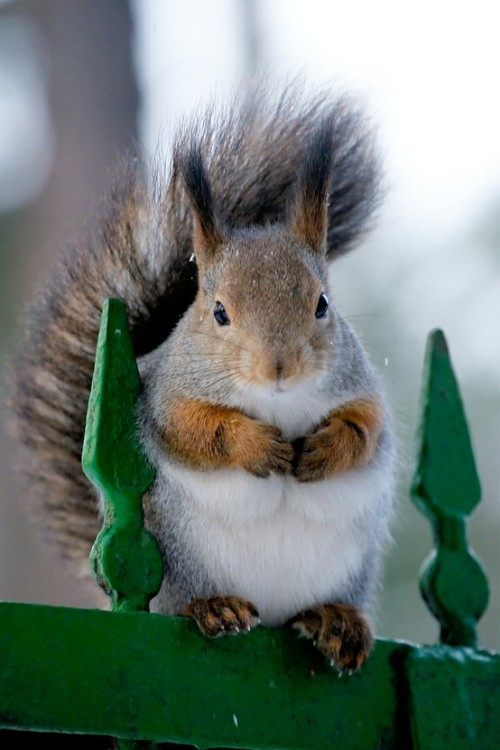 Gahhhhhh cutest squirrel ever!