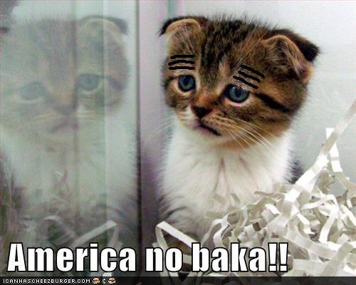 England cat, don't cry! no one here likes Mitt Romney either.