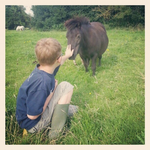 Dinky loves Zane #shetland #cute #pony #fields #Zane  (Taken with Instagram)