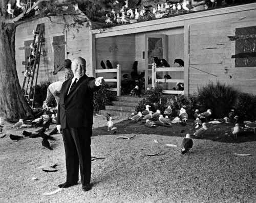 waltdisneywithblood:  Alfred Hitchcock on the set of The Birds (1963). (Via)