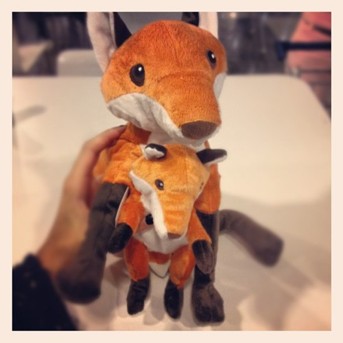 "I don't care how old I am. I love foxes and this was cheap as anything. Not to mention it goes with the whole ""John Steinbeck meets Urban Outfitters"" theme of my room. #foxes #johnsteinbeck #number1JSfangirl (Taken with Instagram)"