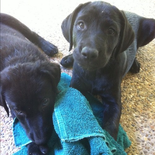 These two still need homes! #puppies #hotsprings #arkansas #ar #abandoned  (Taken with Instagram at Hot Springs, AR)