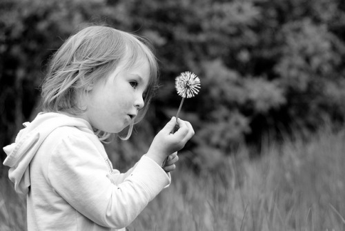 Blowing Dandelions on Flickr.