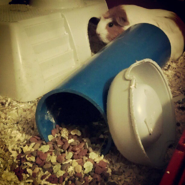 Barney didn't like his food & now he's sulking. (Taken with Instagram)