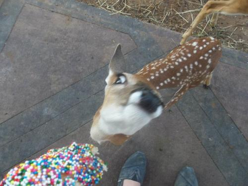 iamthewolff:  veluet:  say it to my face bro i fucking deer u  I'M SCREAMING