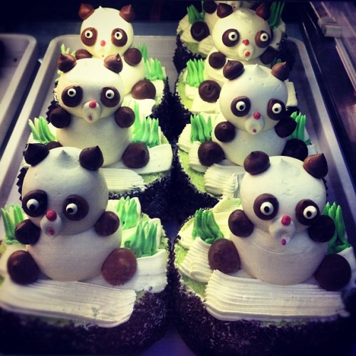 Panda cakes!!!!! #foodie #foodporn #cakes #randomtypography  (Taken with Instagram at Wonderful Patisserie | 名品中西餅屋)