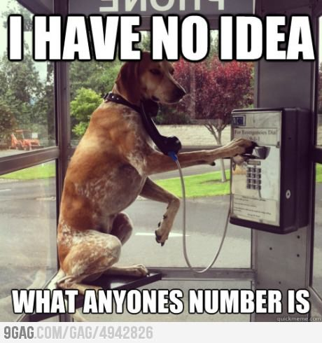 9gag:  When my battery dies and I need to use a payphone  This dog has many human traits.