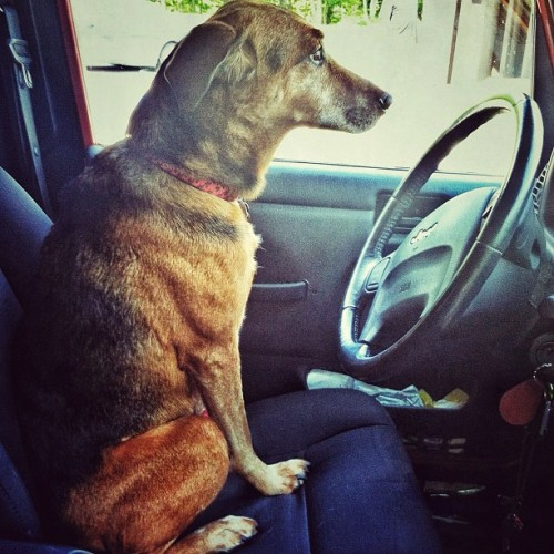 "Simon says: ""Where to next?"" #dog #hiking #simon  (Taken with Instagram)"
