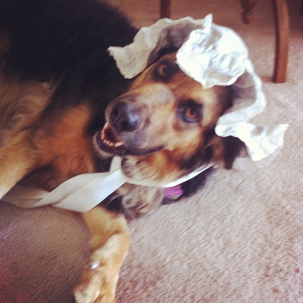 Nicolette van Canine wearing a bonnet! (Taken with Instagram)