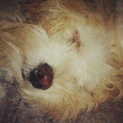 #Sleep #Night #Pets #Dog #Astor (Tomada con Instagram)