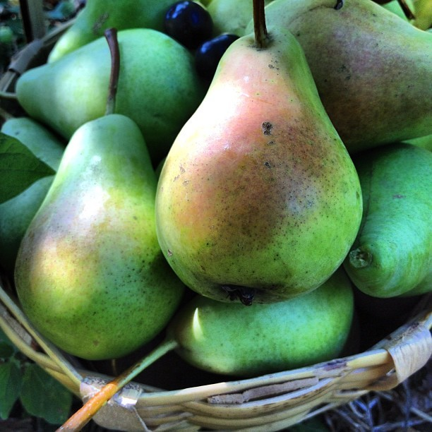A basket full of happiness from the garden… Sun kissed pears… #nature #fruit #garden #istanbul #instagood #webstagram #iphonesia  (Taken with Instagram)