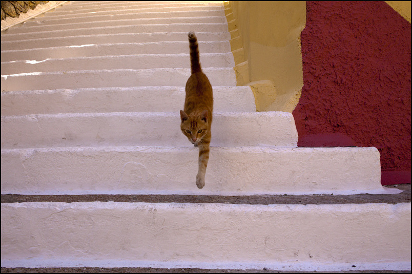 C A T. Yialos (by Claude Renault) in a street of Yialos, on Symi Island. Greece