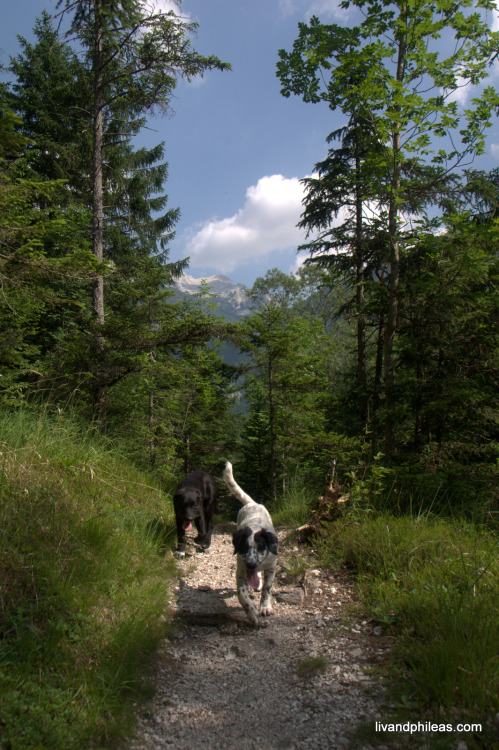 Triglavski NP, Slovenia, 20-22/6/2012 Follow Liv & Phileas on Facebook, Google+, Twitter, 500px, Flickr, Tumblr or Panoramio