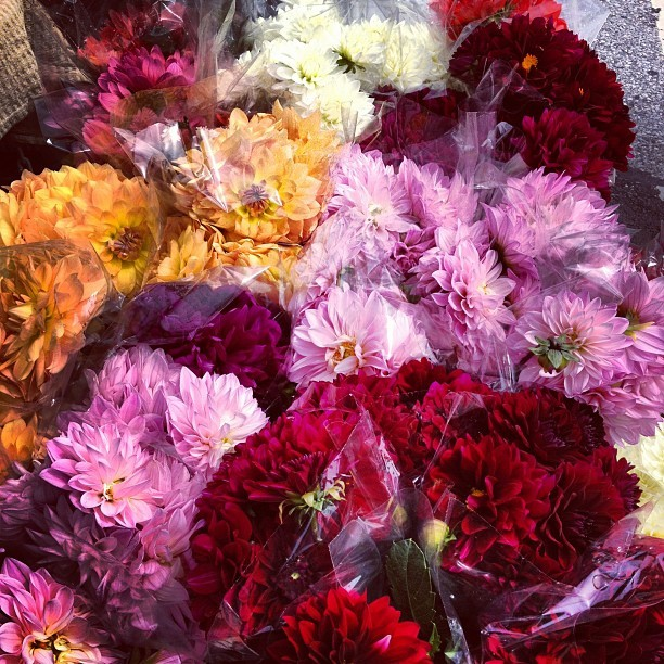 Rainbow of dalias. (Taken with Instagram)
