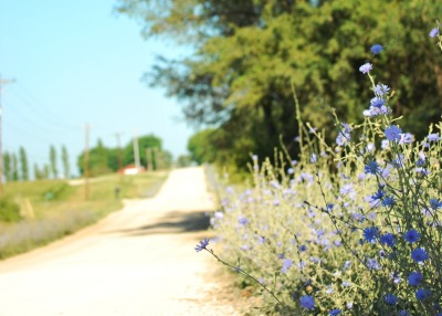 gravel roads and wildflowers
