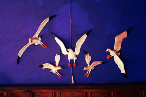 Inside my families cottage. I love these gulls & wallpaper