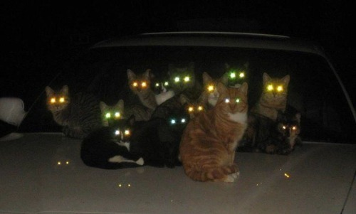 yukidama:  getoutoftherecat:  get off of there cats. the demon-worshiper meeting has been moved to the basement.  run