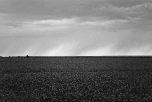 Rain. Rural Farmer City, IL. 2012. Leica M8.