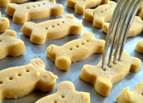 Here is a recipe for simple homemade dog treats! The main ingredient is canned pumpkin. Pumpkin has antioxidants and vitamins c & e, which help reduce cataracts and heart problems. Pumpkin also helps with digestion! It can help with diarrhea and gassy tummies. It can also assist with weight loss, as it's seen as a healthy filler. I put two spoonfuls of canned pumpkin in my dogs' food, and they not only love it! Here is the recipe for NO WHEAT Pumpkin Dog Cookies: One 15oz can of canned pumpkin (make sure it is PURE pumpkin, NOT spiced pie filling) 3/4 cup of rice cereal (like the type you buy for babies) 1/2 cup of dry powdered milk Instructions: Preheat oven to 350 degrees. Mix all three ingredients together (mix the rice cereal dry, don't cook it), roll out and shape into the cookies you want. Bake for 30 minutes, turn the cookies over, and then bake for another 30 minutes.  All of my dogs loved these treats, and they were major hit at a recent rescue fundraiser!