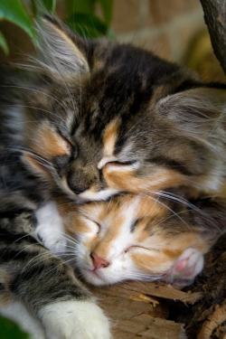 magicalnaturetour:  Kittens (by jgeraert) ~ Sweet Dreams beautiful friends ♥