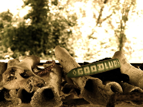 speckls:  A bracelet left on a pile of bones by a visitor to the Killing Fields attached to the Khmer Rouge's S.21 prison in Phnom Penh, Cambodia.