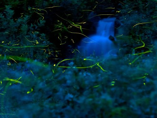 Fireflies Photograph by Teruo Araya (via National Geographic Photo of the Day)