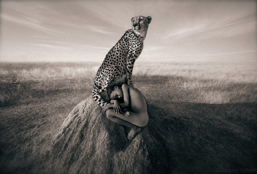 To be watched over by a guardian cheetah.  —Gregory Colbert