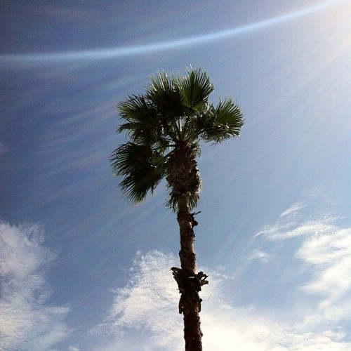 #beautiful Day!!! #palmtree #sun #glare #sky #clouds #nature #iphonesia #iphone #iphoneonly #ikonic (Taken with Instagram at Brighthouse field)