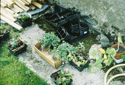 w1ldhunt:  waiting to be planted by Sandra Veldre on Flickr.