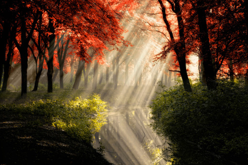 """That Same Other World rld"" by Lars van de Goor A magical forest scene. The rays are so strong , you can even see the reflection in the water."