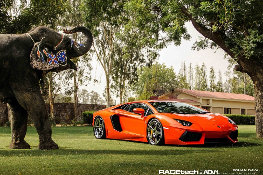 Lamborghini Aventador (and Elephant) for ADV.1 (vía Carscoop)