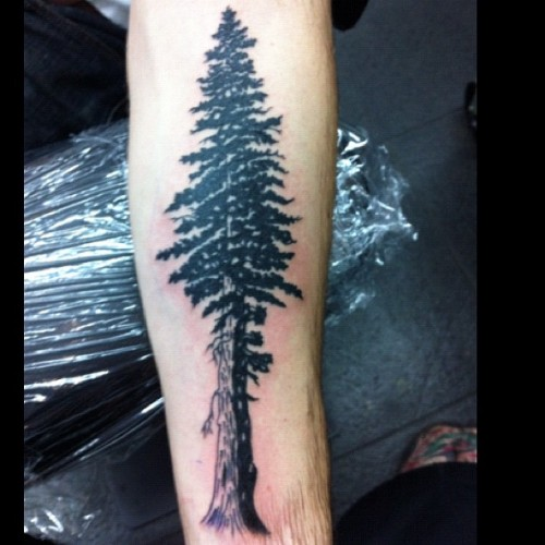 #redwood #tree #tattoo (Taken with Instagram)